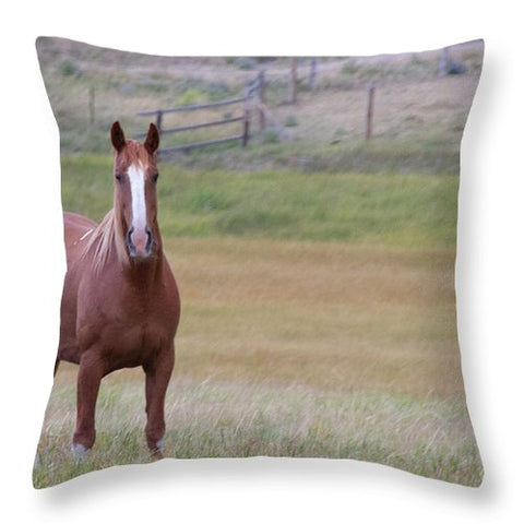 Brown Horse in Field - Throw Pillow