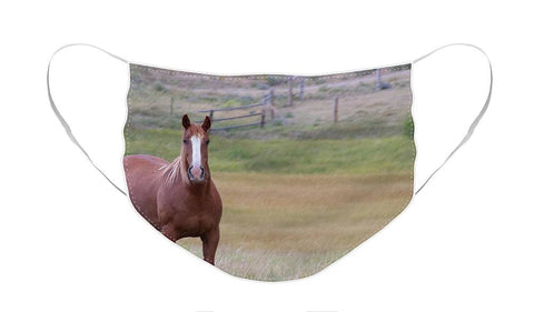 Brown Horse in Field - Face Mask