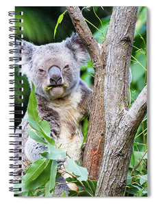 Koala at the Animal Sanctuary in Currumbin Queensland - Spiral Notebook