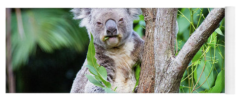 Koala at the Animal Sanctuary in Currumbin Queensland - Yoga Mat