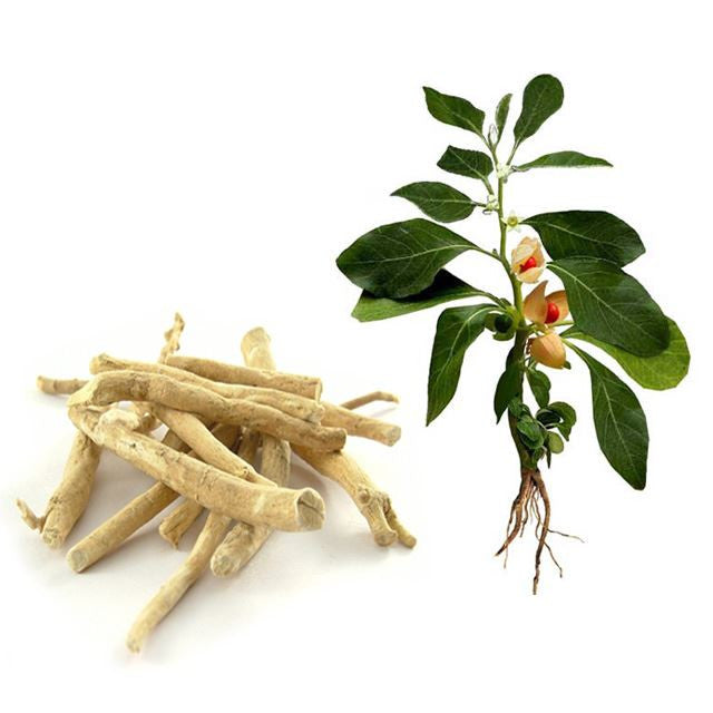DAILY 600MG ASHWAGANDHA HELPS RESISTANCE TRAINERS BUILD MORE MUSCLE AND LOSE FOR FAT
