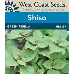West Coast Seeds Green Perilla Shiso - 343 Seeds