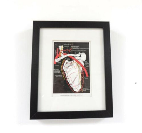 Vintage Anatomical Medical Framed Colour Print /599