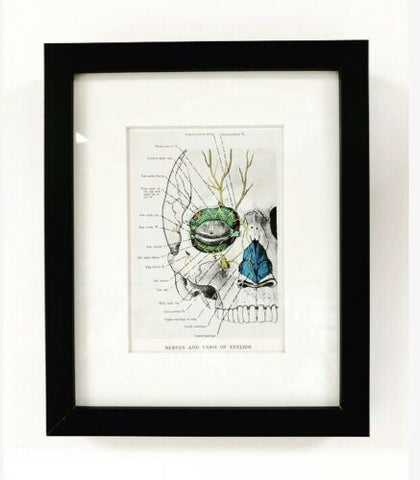 Vintage Anatomical Medical Framed Print Skull Nerves & Tarsi Of Eyelids / 752