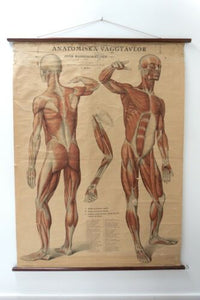 Original Vintage Antique Swedish Anatomical Medical Wall Hanging /1360