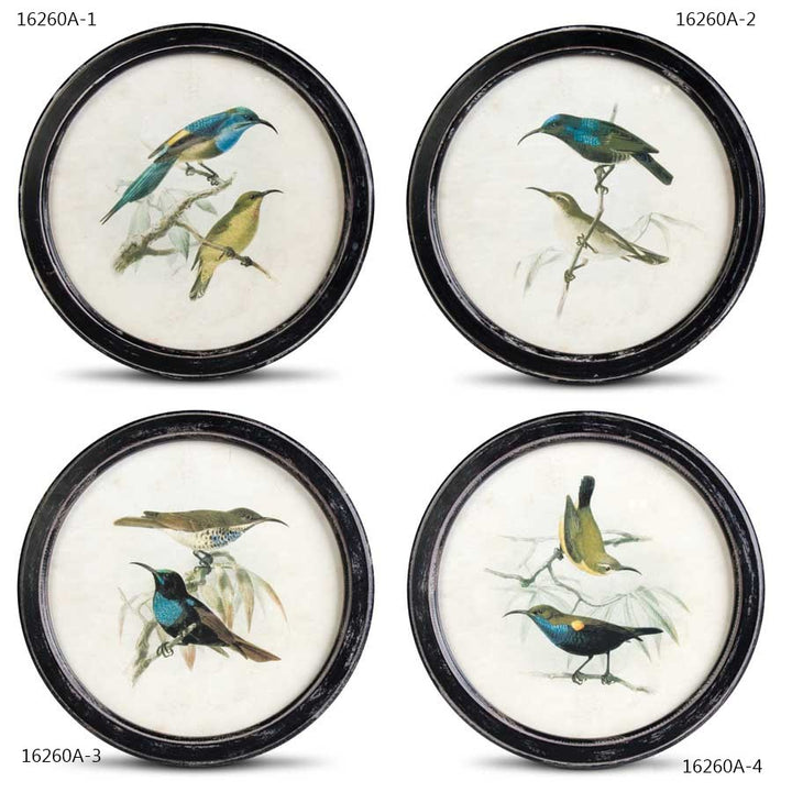 Assorted 13.75 Inch Round Bird Prints With Black Distressed Frames (4 Styles sold individually)