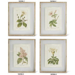 Assorted 21.5 Inch Botanical Print In Shadowbox Wood Frame (4 Styles)-Sold Individually
