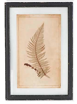 22.5 Inch Black Wood Framed Glass Vintage Fern Print-13108A-3