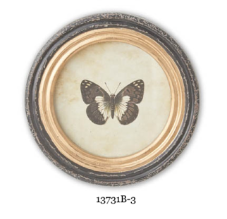 Assorted 9.5 Inch Round Butterfly Prints with Black and Gold Frames (4 Styles Sold Individually)