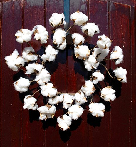 Faux Cotton Wreath made of Preserved Cotton Bolls Attached to Flexible Stems for that Rustic Farmhouse Home Decor in 12-14 Inch Diameter