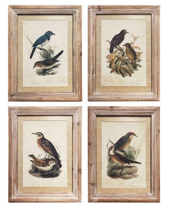 17 Inch Assorted Bird Prints with Weathered Frames (4 Styles)