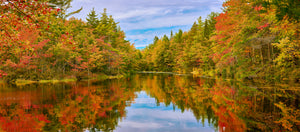 Autumn Splendor In Maine