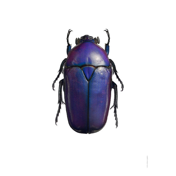 Beetle Print 30x40cm - indish-design-shop-2