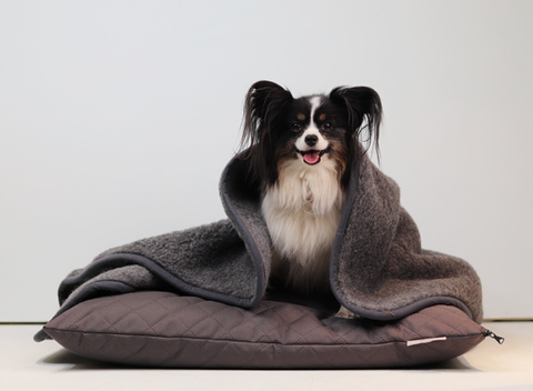 Tranquility Dog Blanket in Grey