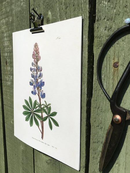 Blue Lupin Botanical Print Artisan Made