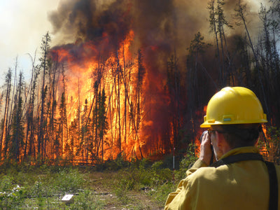 Team on Fire: Understanding the Environmental Impact of Wildfires