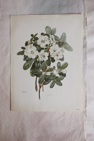 Antique Large Floral Print (2)