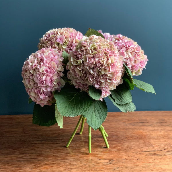 Pink Hydrangea Bouquet | Highgate Flowers