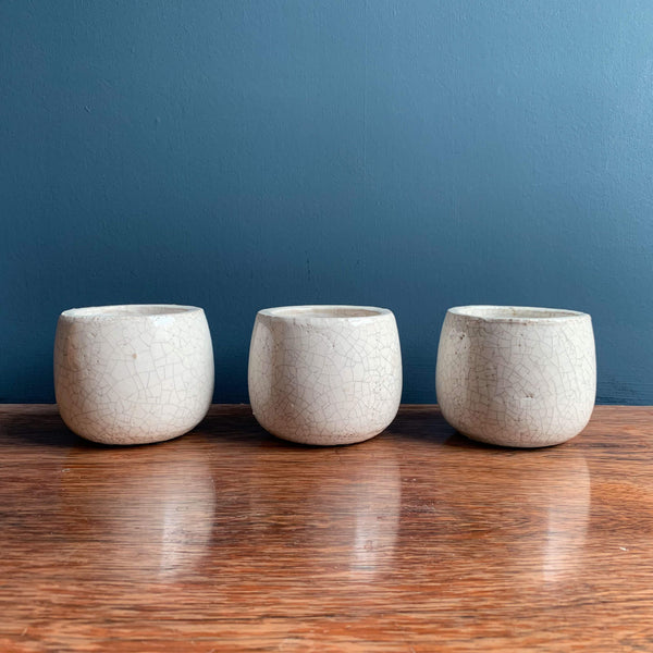 Set of Three Succulents, Plant Pots | Highgate Flowers