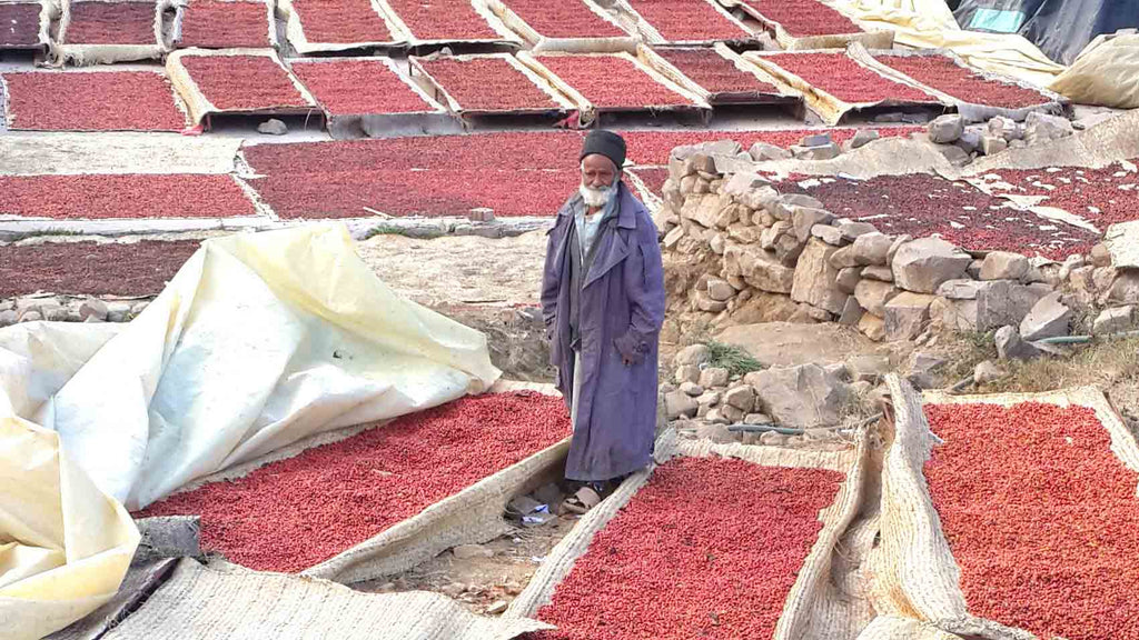 Red coffee cherries drying on mats at collection center in Yemen