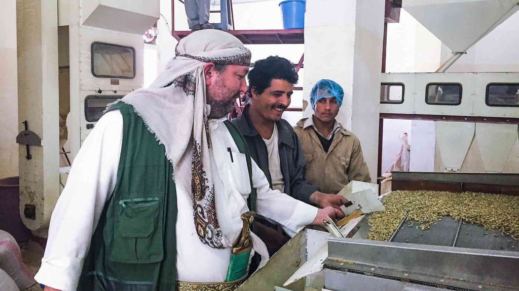 The mill team sorting green coffee on a densimetric table, at the Rayyan Mill in Yemen.