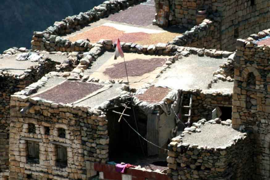 Coffee Drying on Rooftops of Houses in Yemen