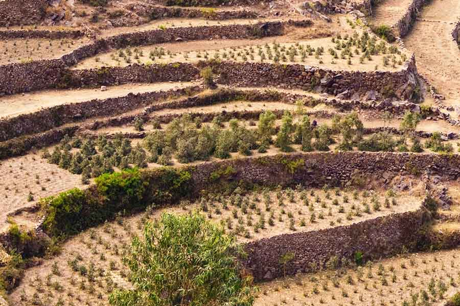 Yemen Coffee Terraces