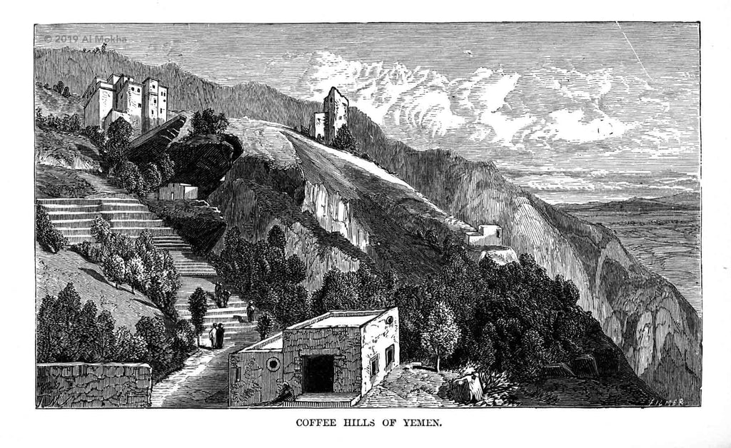 Coffee terraces in Yemen, black and white engraving