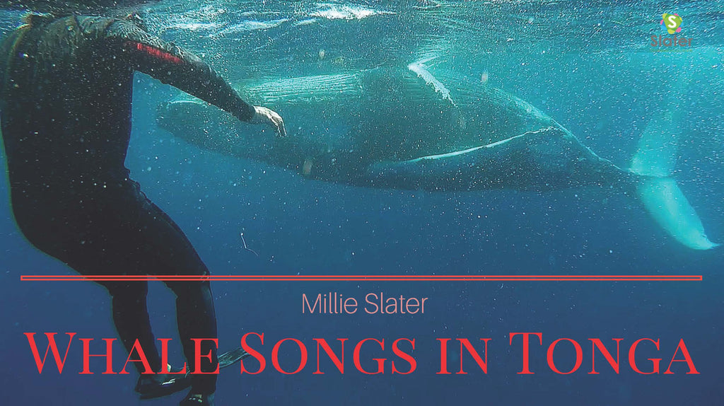 whale-song-in-tonga-by-slaters