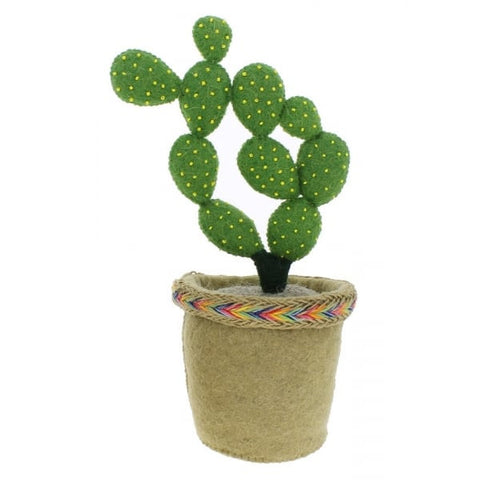 Fiona Walker England Linked Circle Cactus in a Pot