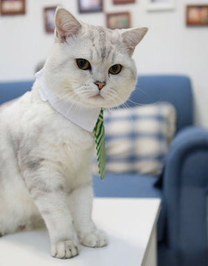 Striped Pet Tie