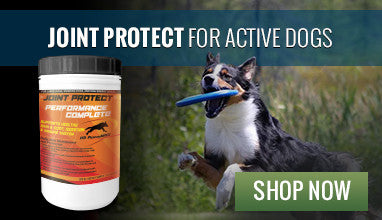 Joint Protect for Active Dogs