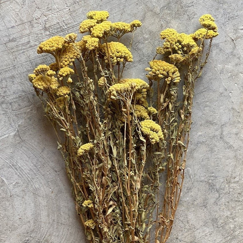 Dried Flowers - Achillea Mini, Yellow / زهور