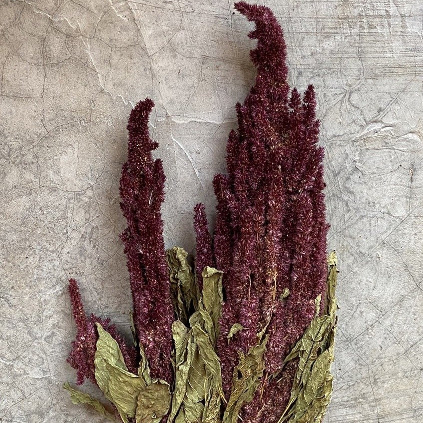 Dried Flowers - Amaranthus Pink / زهور
