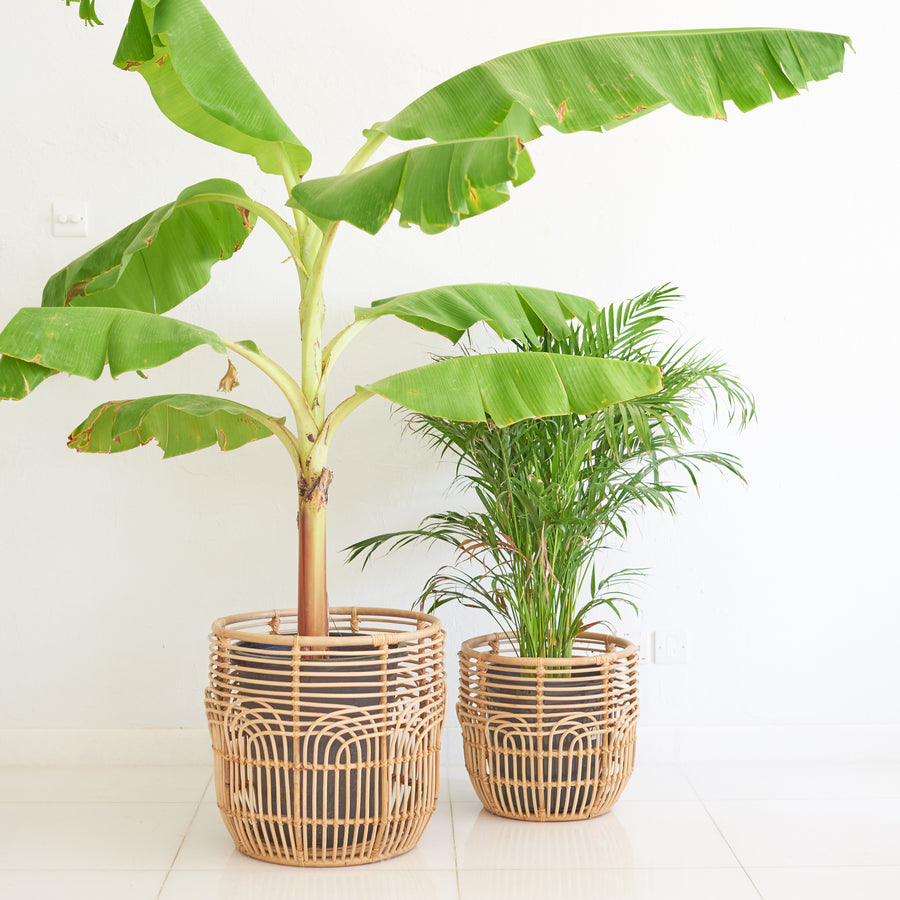 Deco Rattan Basket/Pot / سلة