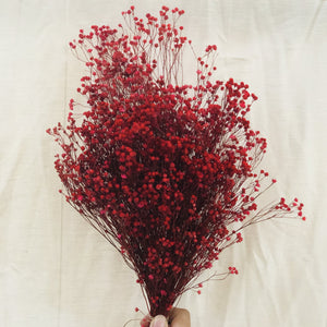 Dried Flowers - Bloom Broom Bunch, Pink (Red) / زهور