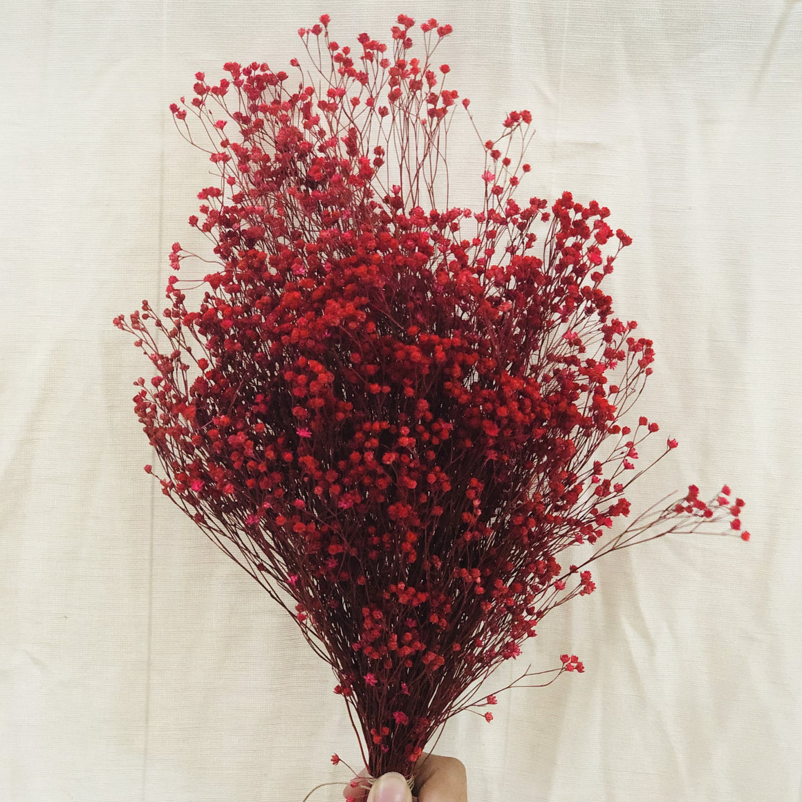 Dried Flowers - Bloom Broom Bunch, Red / زهور