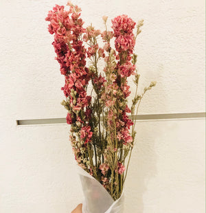 Dried Flowers -  Delphinium Pink/ زهور