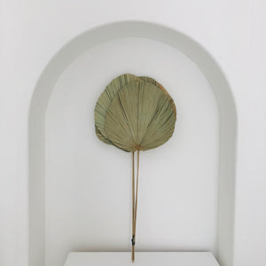 Deco Palm Leaf Fronds / ديكور