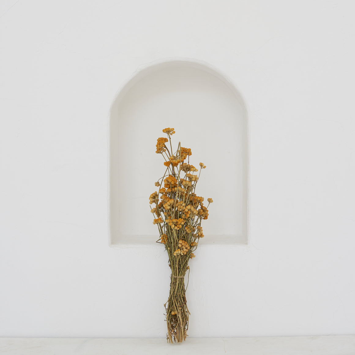 Dried Flowers -  Lona
