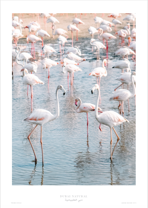 Dubai Natural Framed Print, White - Flamingos / طباعة