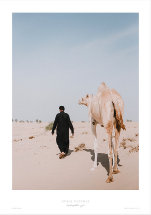 Dubai Natural Framed Print, White  - Camel / طباعة