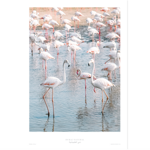 Dubai Natural Print Only - Flamingos / طباعة