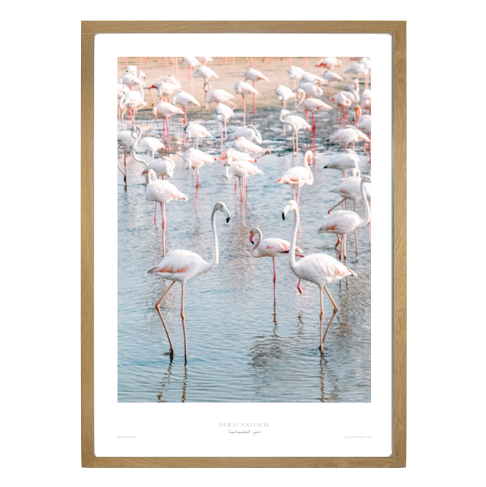 Dubai Natural Framed Print, Oak - Flamingos / طباعة