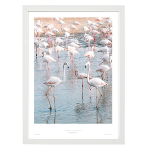 Dubai Natural Framed Print, White - Flamingos
