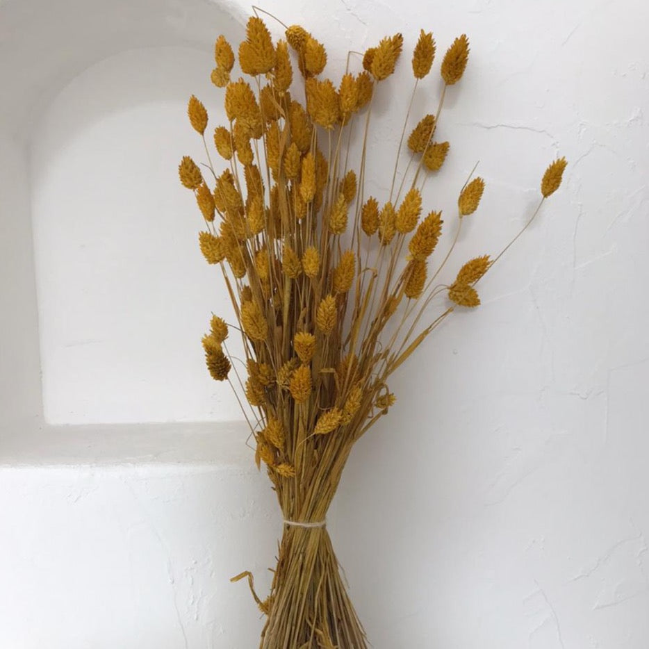 Dried Flowers - Phalaris Yellow / زهور