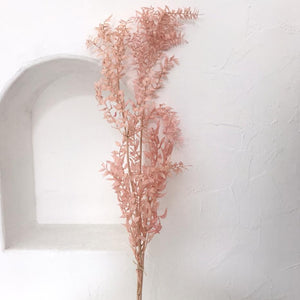 Dried Flowers - Ruscus (Pink) / زهور