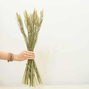 Dried Flowers - Wheat / زهور