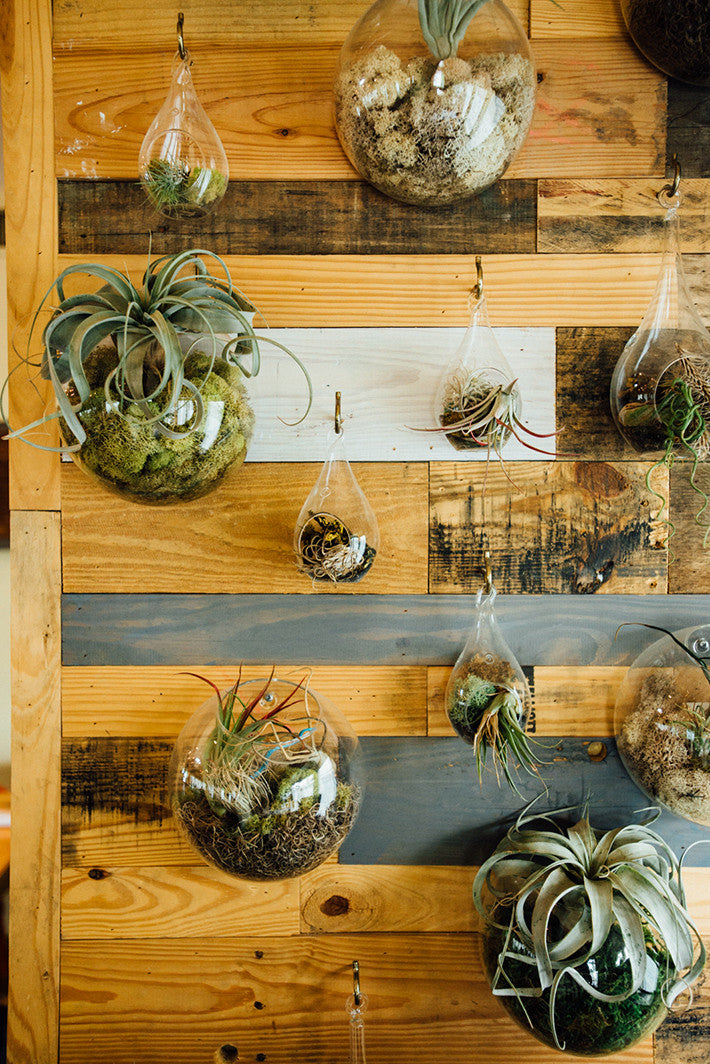 hanging terrarium as restaurant decor at Righteous Foods Healthy Tacos Restaurant Trends