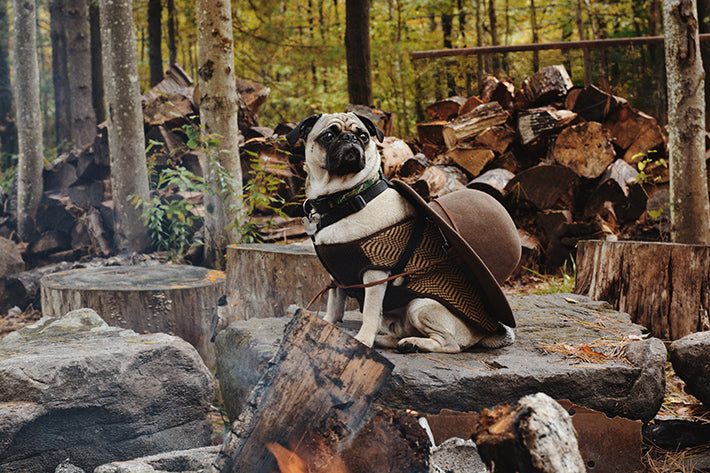 the outlier inn duncan the pug dogs allowed - glamping airbnb catskills upstate ny